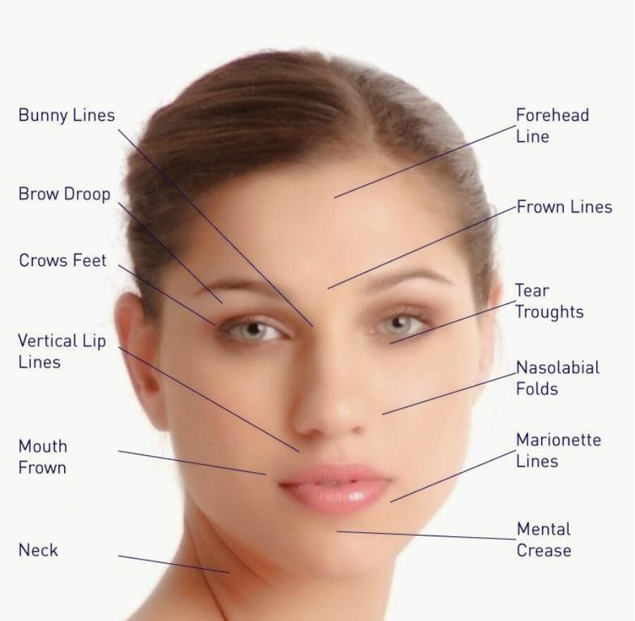 Facial skin anatomy-6443