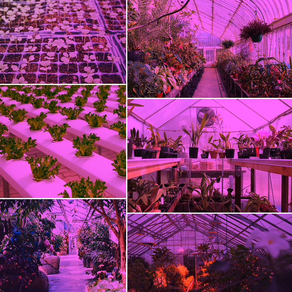 220V LED Grow Light Wachstumslampe Pflanzenleuchte Flower Gewächshaus Wuchs